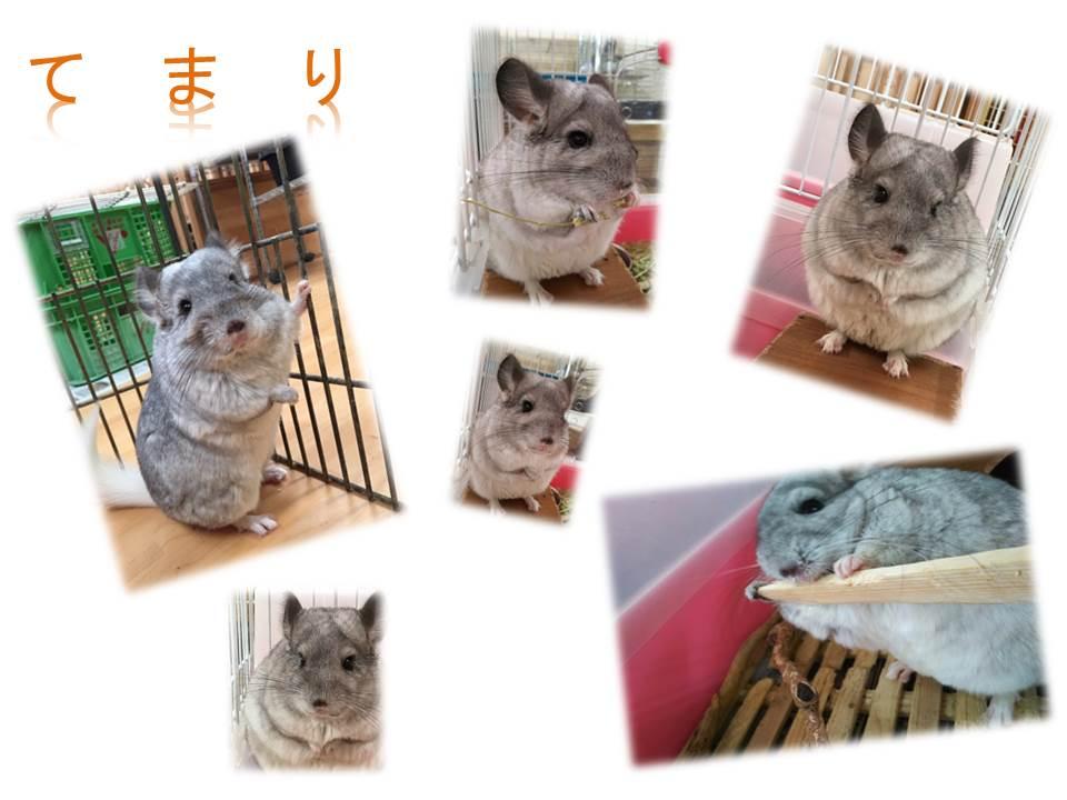 チンチラのケージ改善☆エコ・コミュニケーション科
