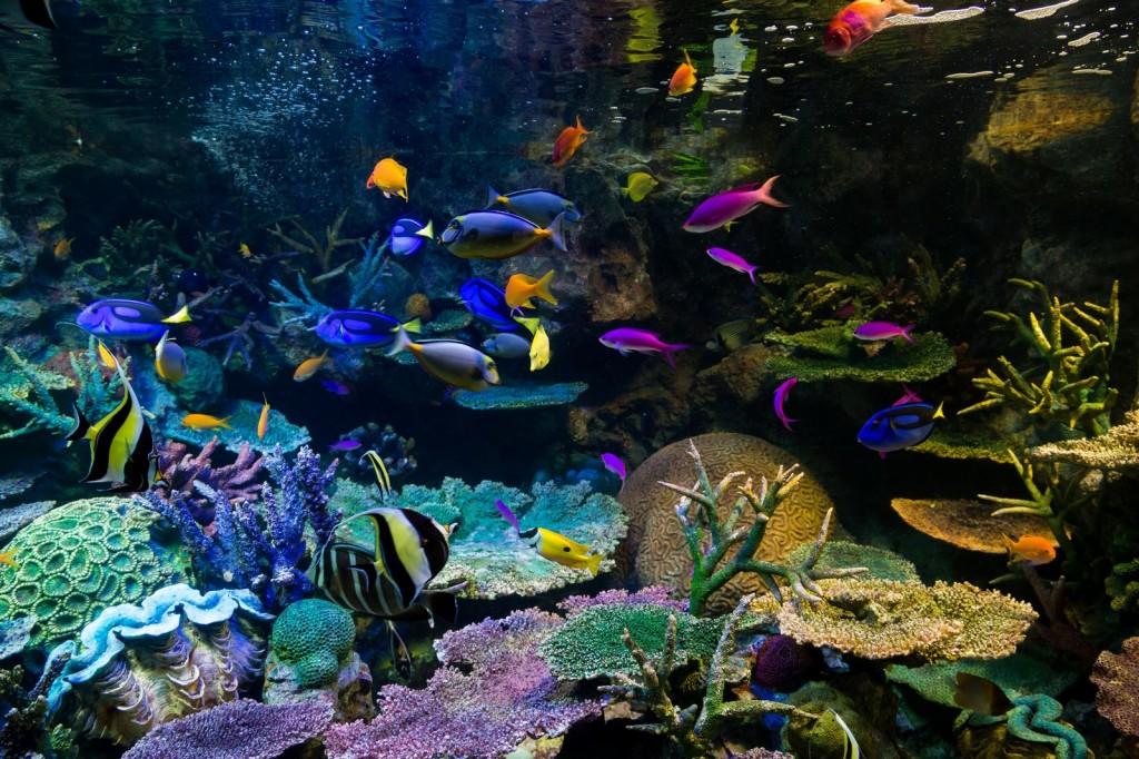 人と魚、両者にとって美しい水槽☆