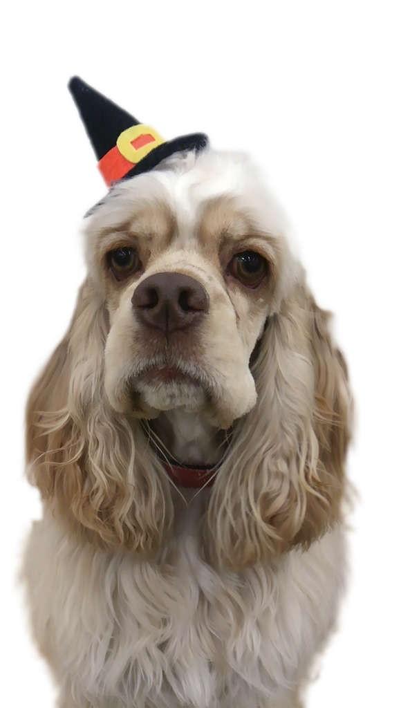 犬と人が幸せに暮らすために☆エコ・コミュニケーション科