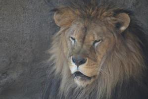 八木山動物公園で校外実習~動物園観察会へ向けて~