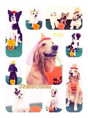 【写付】とってもカワイイ♪学校犬たちからハロウィンをお届けします♪